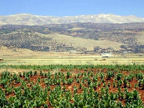 Vale do Beqaa Regiões produtoras do vinho libanês